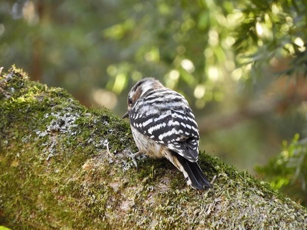 写真: 野鳥 67