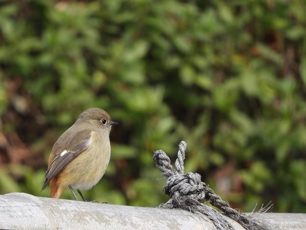 写真: 野鳥 72