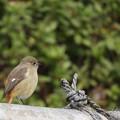 野鳥 72