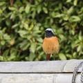 写真: 野鳥 73