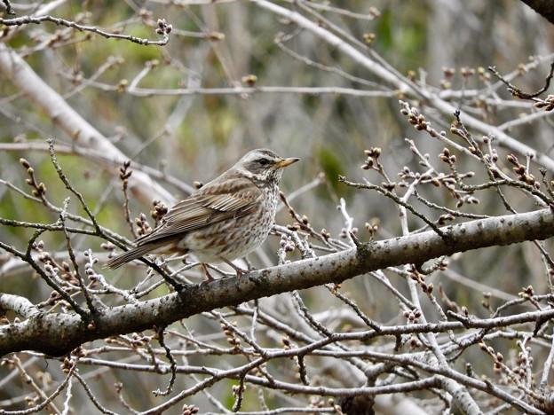 写真: 野鳥 76