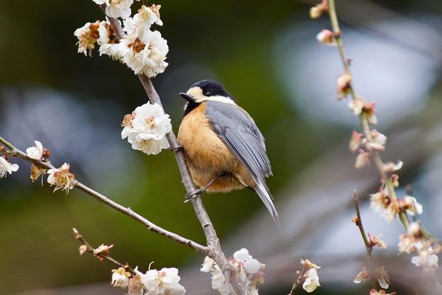 写真: 野鳥 80