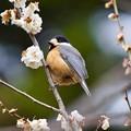 野鳥 80