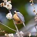 Photos: 野鳥 80