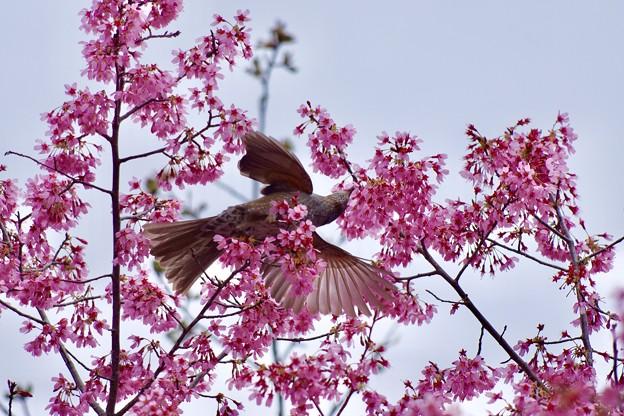 野鳥 81