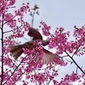 写真: 野鳥 81