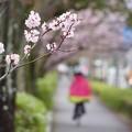 Photos: 小枝ちゃん