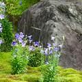 写真: 平安の庭 2