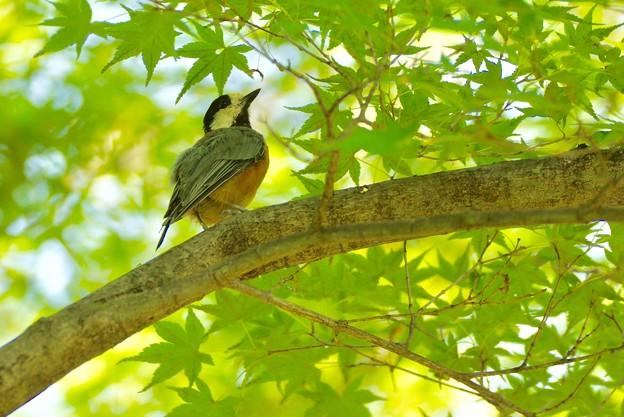 Photos: 野鳥 84