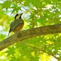 写真: 野鳥 84