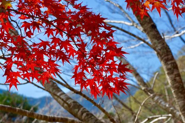 Photos: 紅色