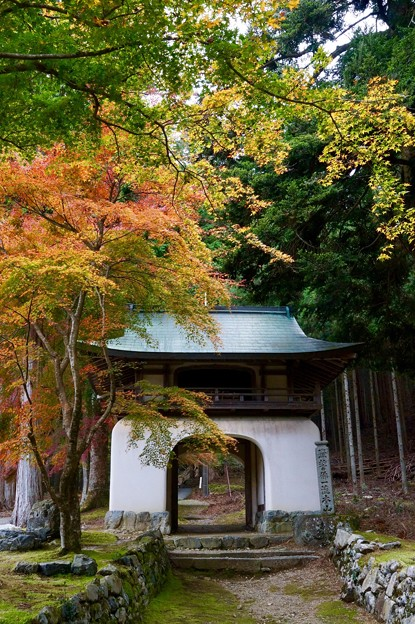 Photos: 阿弥陀寺 楼門