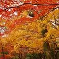 写真: 黄葉も綺麗~