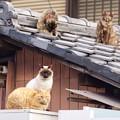 写真: ご近所さん