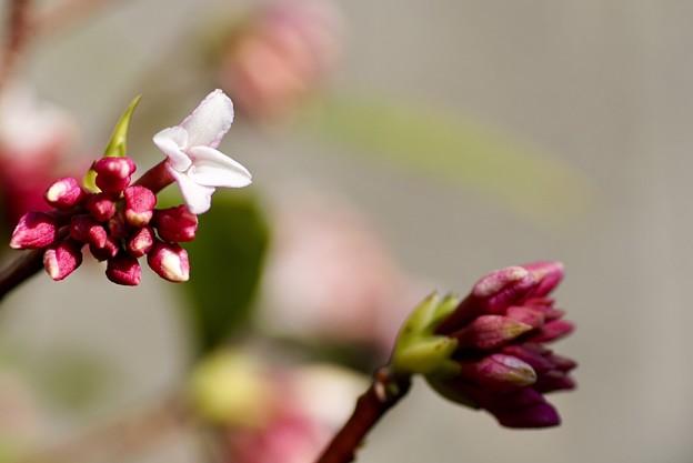 Photos: 咲きました~