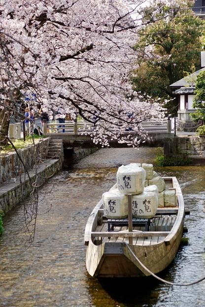 高瀬舟と桜