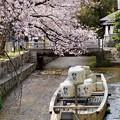 Photos: 高瀬舟と桜