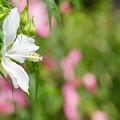 夏の花 2