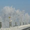 Photos: 凍った木