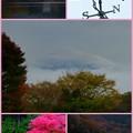 2015/11/09・・・今日の散歩?06