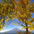 Photos: 2015/11/16・・・お山と紅葉?04