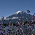 2018/05/20・・・5月の富士山No.02