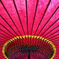 写真: 野点傘(のだてがさ) 17062018