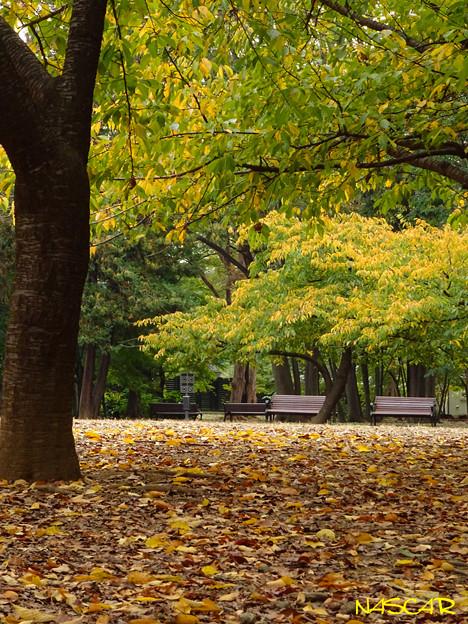 落ち葉の公園 26112018