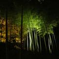 竹林 29112018