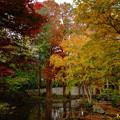 林試の森公園 03122018
