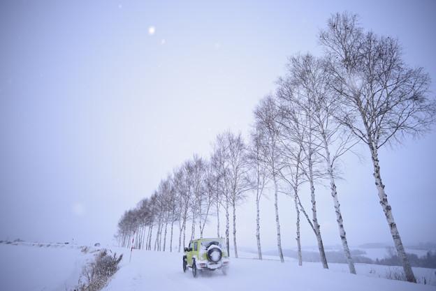 北海道 美瑛。七星の樹