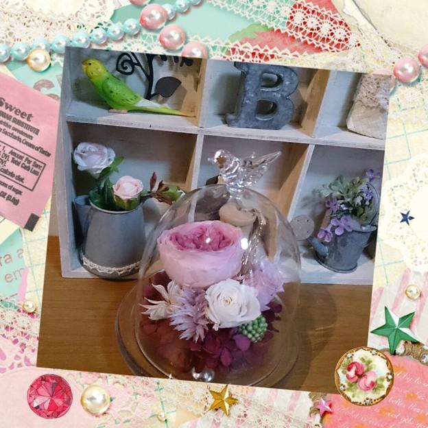 Photos: トラさんからのプレゼント