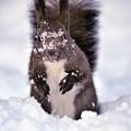 写真: 雪塗れww