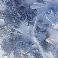 写真: Frost.Flower