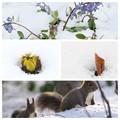 Photos: Spring Ephemeral