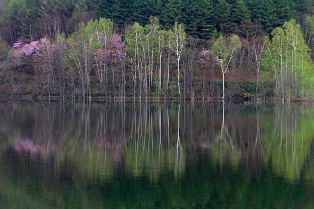 Photos: ダム湖の春