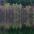 ダム湖の春