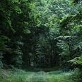 Photos: 林道の先に