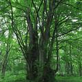 Photos: 森のネ申