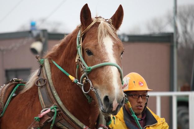 2019.04.14 4R合格馬 #タケノダイマオー 1 #ばんえい競馬