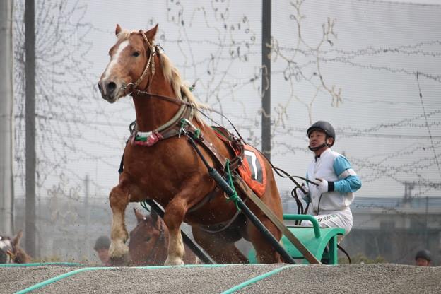 2019.04.14 4R合格馬 #タケノダイマオー 2 #ばんえい競馬