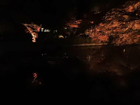 清水寺(夜)15