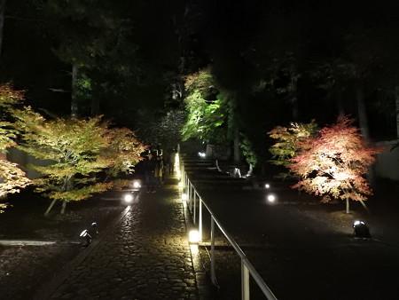 知恩院(ライトアップ)30