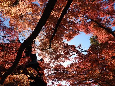 東福寺68