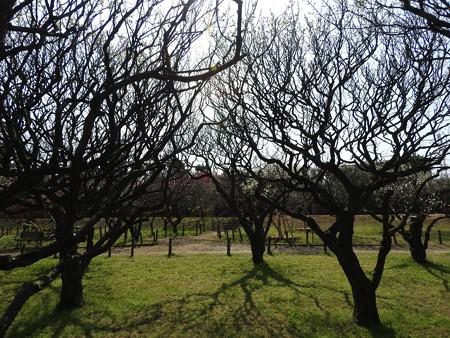 梅林公園3