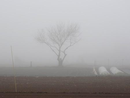 霧の朝01