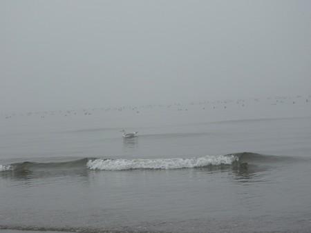 霧の朝 幕張海岸03