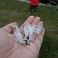 写真: 霜柱と芝生