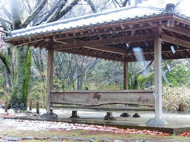 雪宿り(東屋)