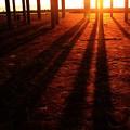 写真: 琥珀の輝き